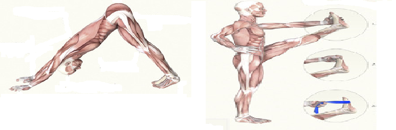 anatomy pic 2.png