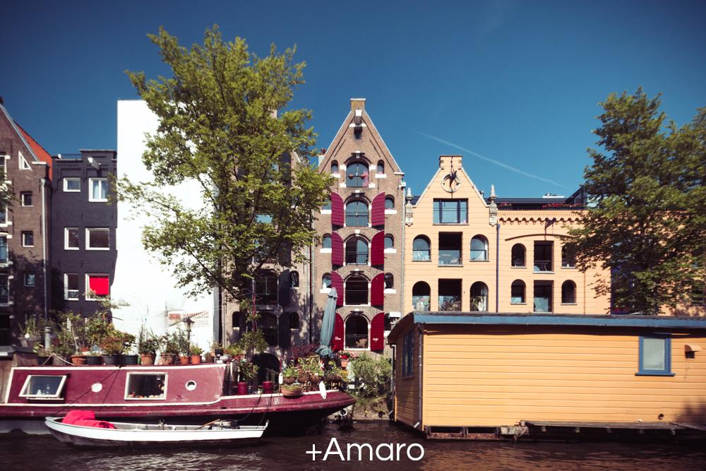 +Amaro.jpg