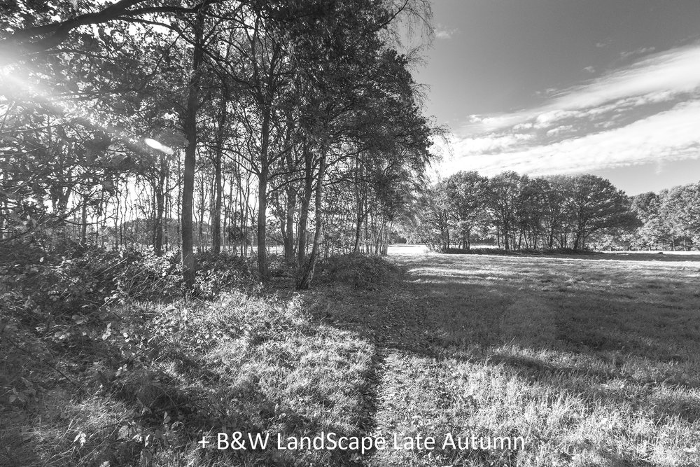 BW LandScape Late Autumn.jpg
