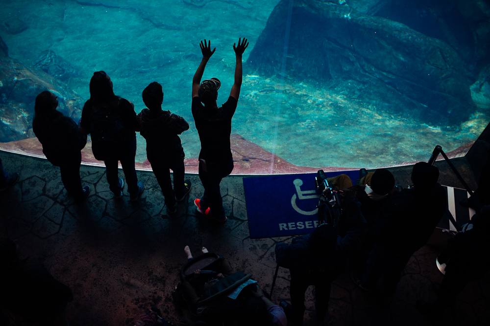 Aquarium-Fujifilm-X100s-5.jpg