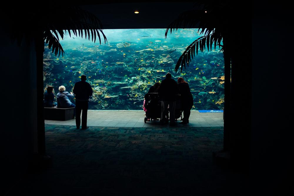 Aquarium-Fujifilm-X100s-3.jpg