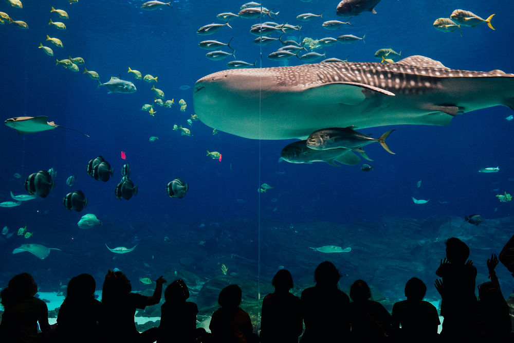 Aquarium-Fujifilm-X100s-8.jpg