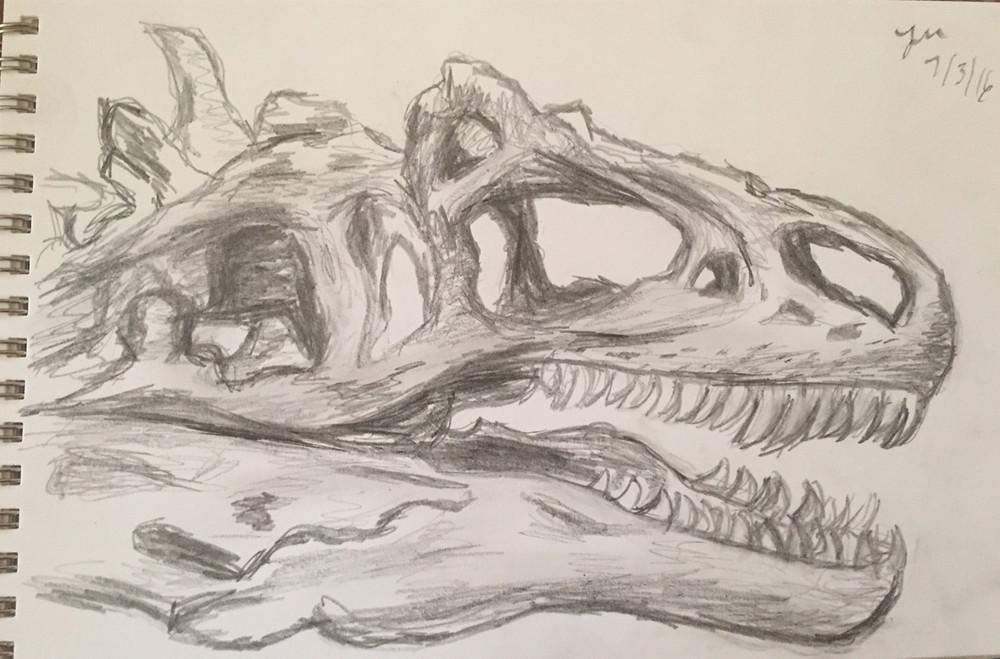 skull_IMG_0055.jpg
