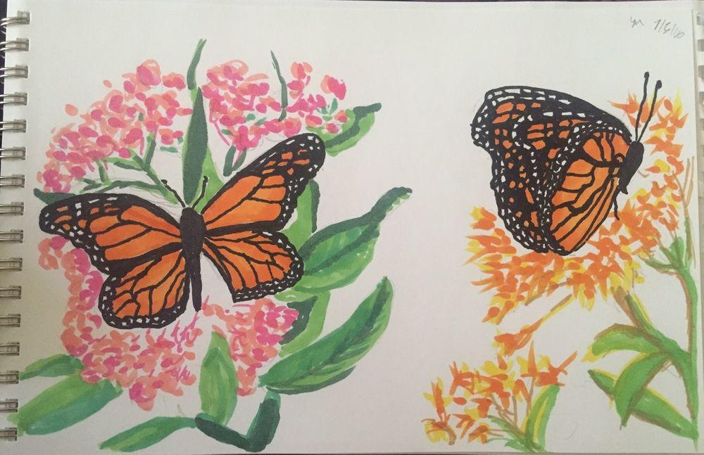 butterfly_IMG_0051.jpg
