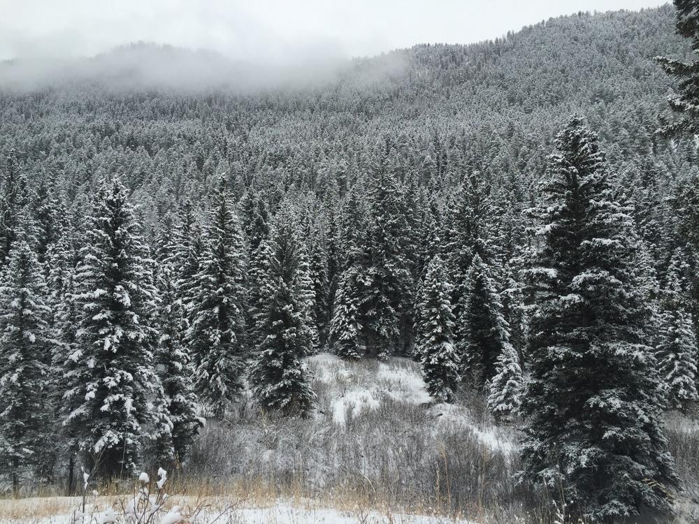 WinterWoods1.jpg