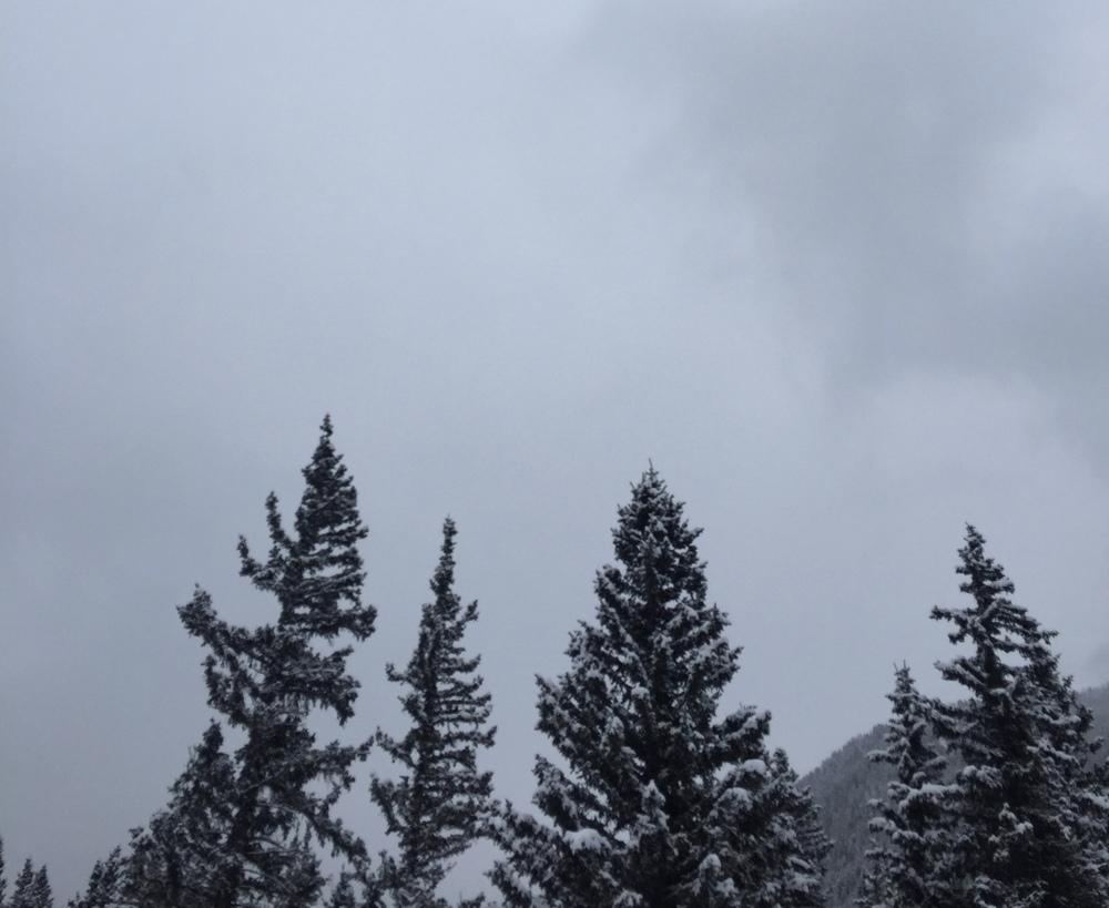 WinterWoods2.jpg