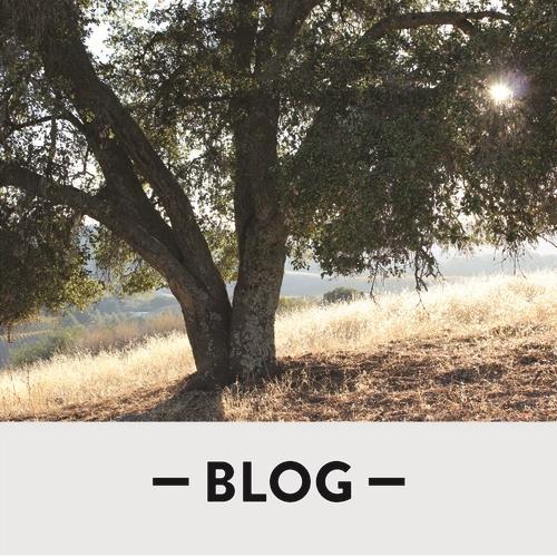 Blog_Square_tree_v2.jpg