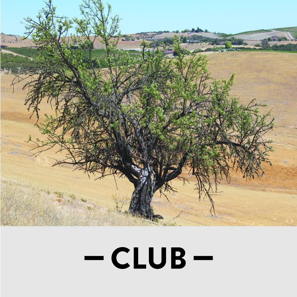 Club_Square_tree_v2.jpg