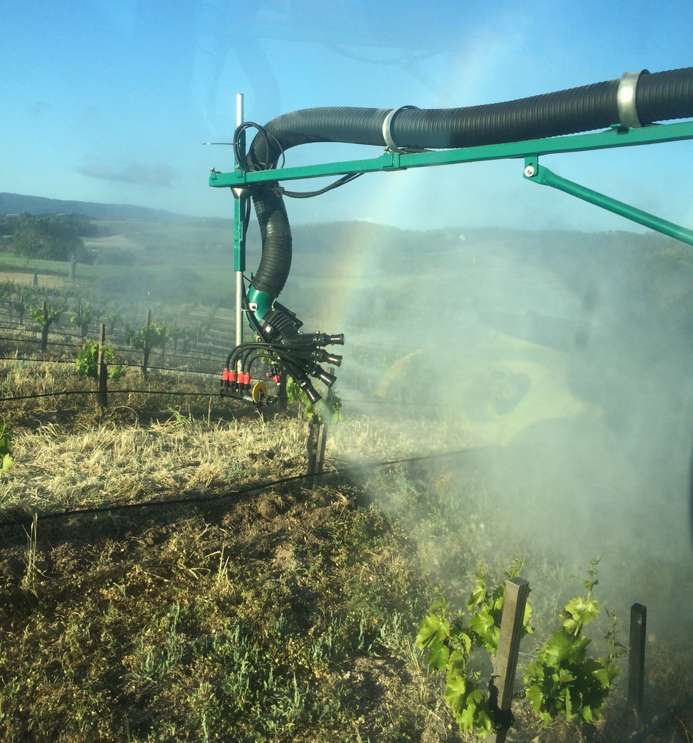 Spraying compost tea directly onto our vines.