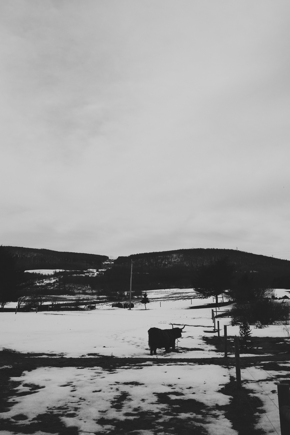 blackandwhite-muskox-phone-photography-syracuse-ny