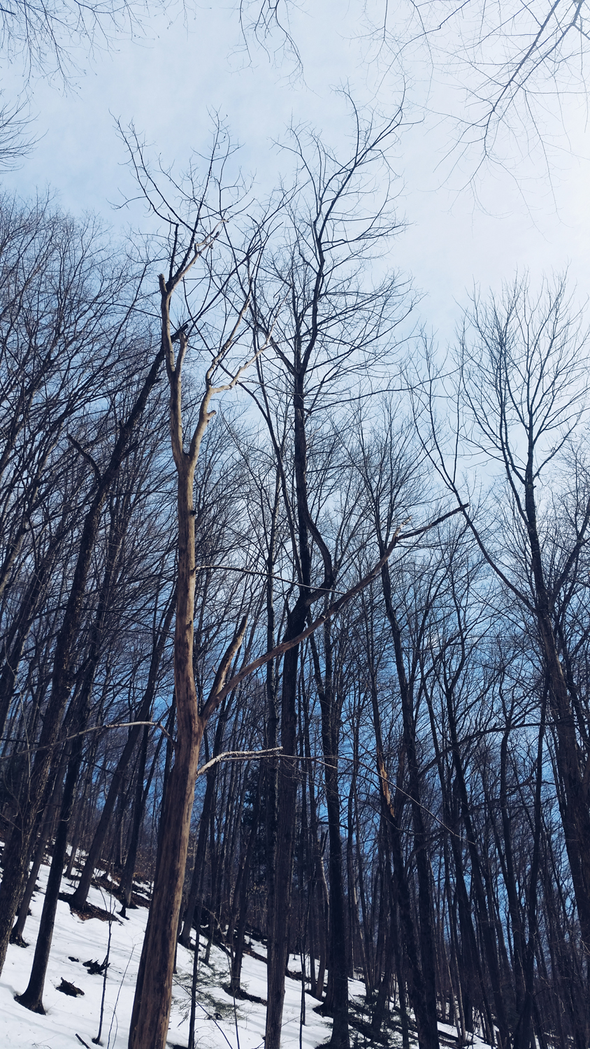 blue-sky-trees-winter-phonephotography