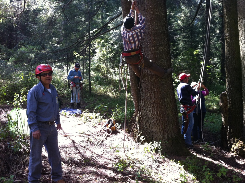 PhD Daniel Rivas from the Mexican Association of Arboriculture training the site maintenance crew the basics of tall height tree pruning    Image credit: Juan Rovalo