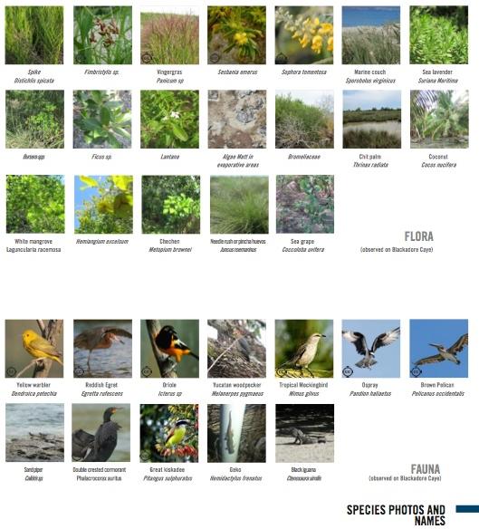 Excerpt of report showing flora and fauna species