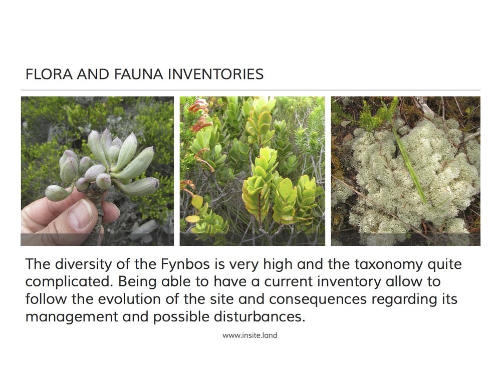 flora and fauna inventories.jpg