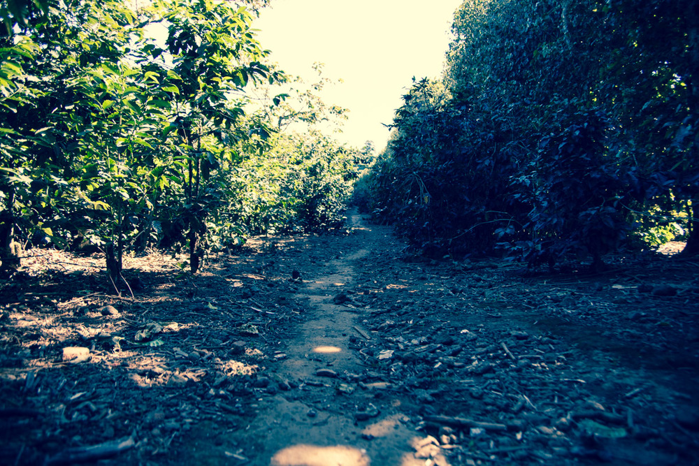 Walking the well worn paths at Finca El Rosario.