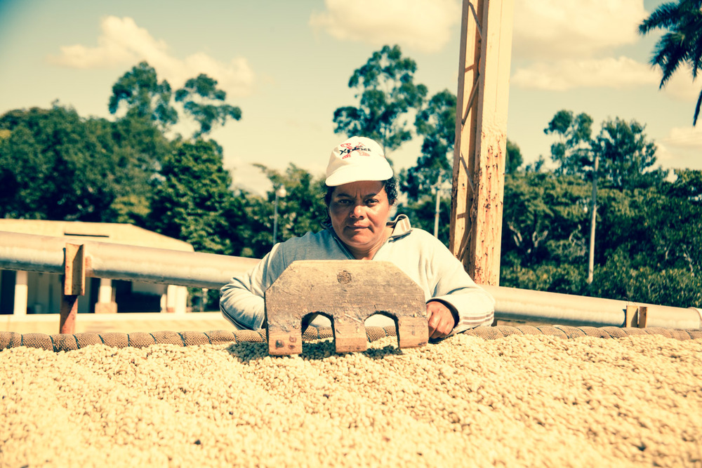 A worker regularly turns the coffee beans as they dry at Beneficio Piedre Grande. Their rigor for turning the beans impressed us, we've not seen this regularity elsewhere.