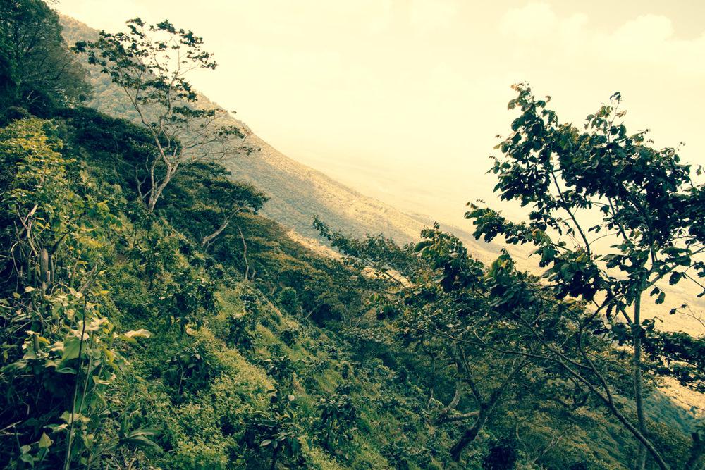 The steep hillside of the Las Delicias farm in El Salvador.