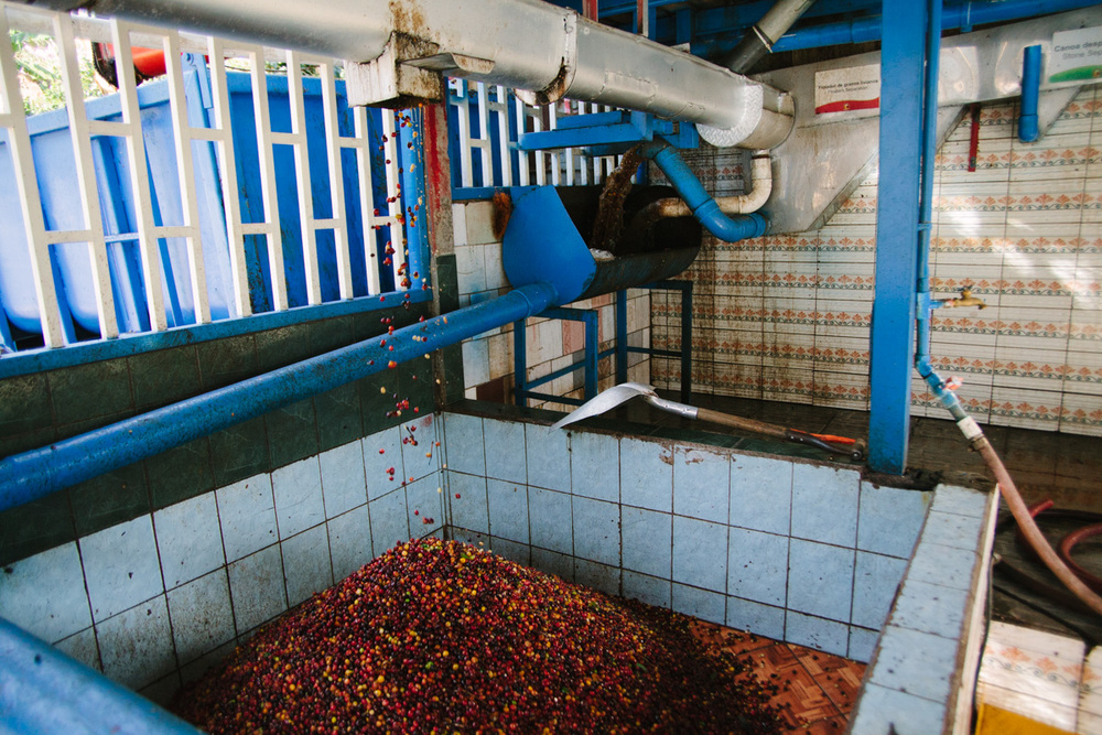 Coffee cherry collects at the Don Mayo mill in Costa Rica.