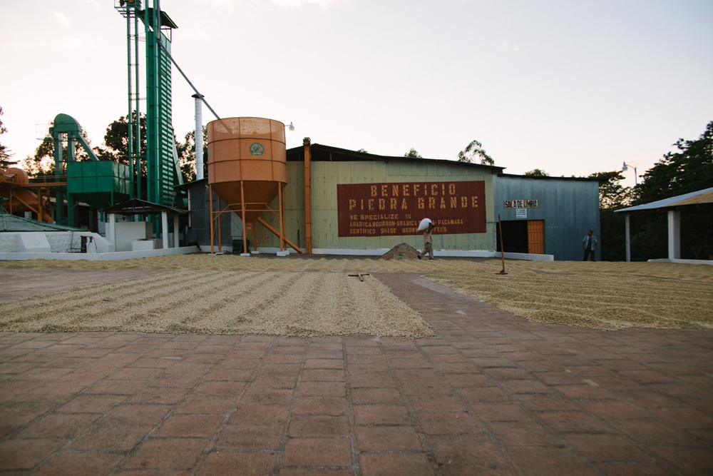Coffees are patio-dried at Beneficio Piedra Grande in El Salvador.