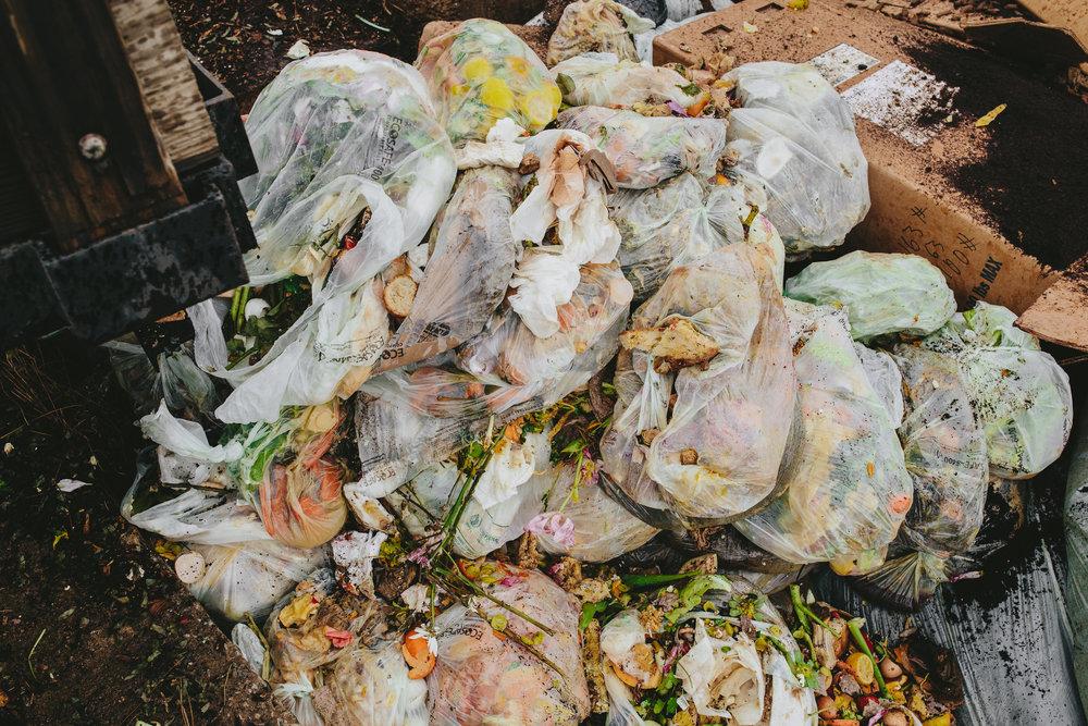 compost-52.jpg