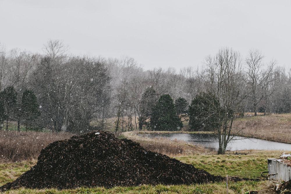 compost-54.jpg