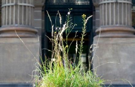 Grasslands-(Site-test-SLV)-2014.-Linda-Tegg_0[1].jpg