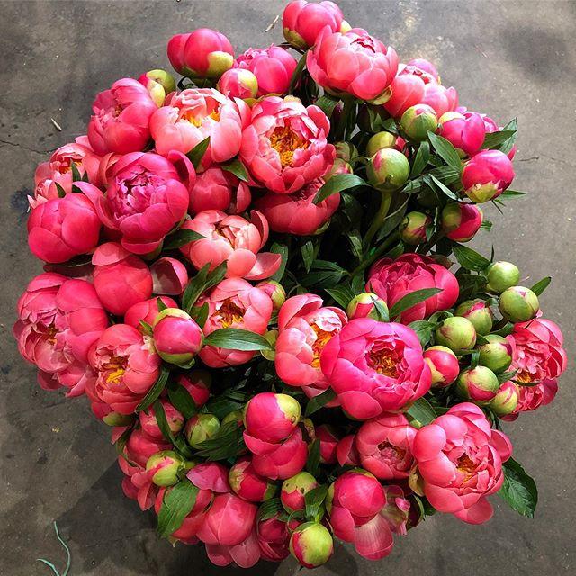 #inspiration #pink #peonies #spring