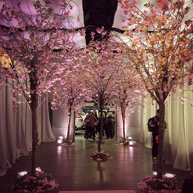 When you want to bring the cherry trees INSIDE your event, call us. #webuiltthosetreesoutofrealbranchesandblossoms🌸🌳 #batmitzvah