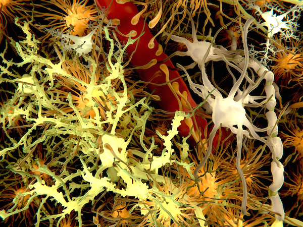 The brain: the most complex thing known to man