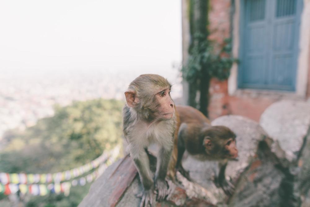 Nepal_110513-78.jpg