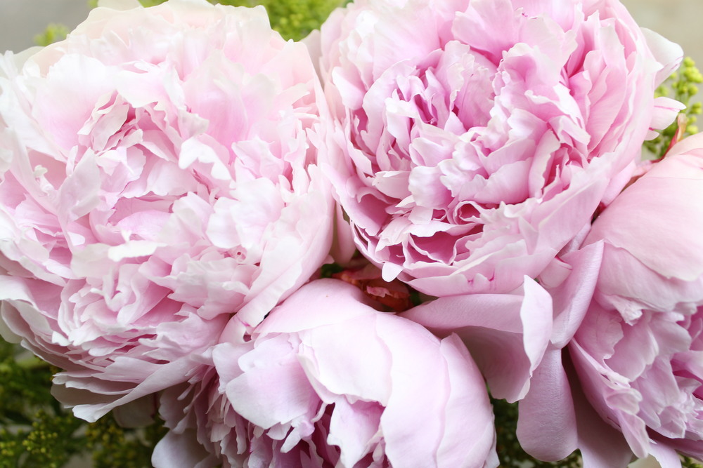 peonies by pommel lane