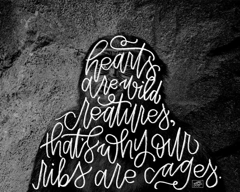 """Wild Creatures""- Image"