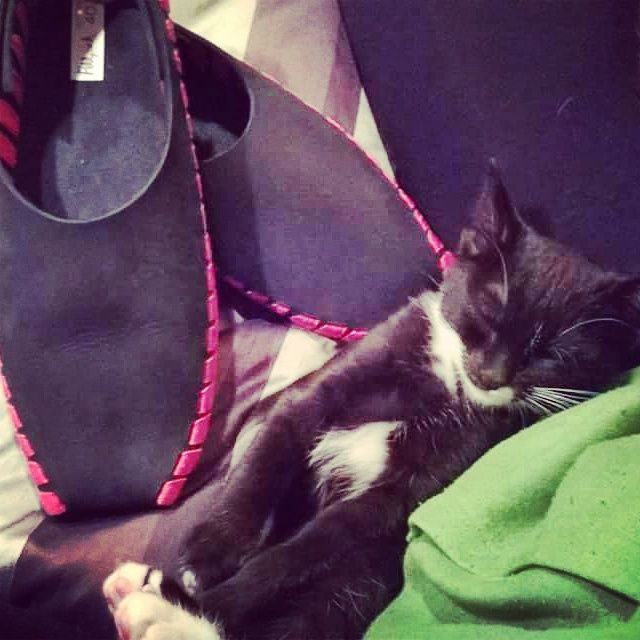 cutest-little-kitten-with-pikkpack-shoes.jpg