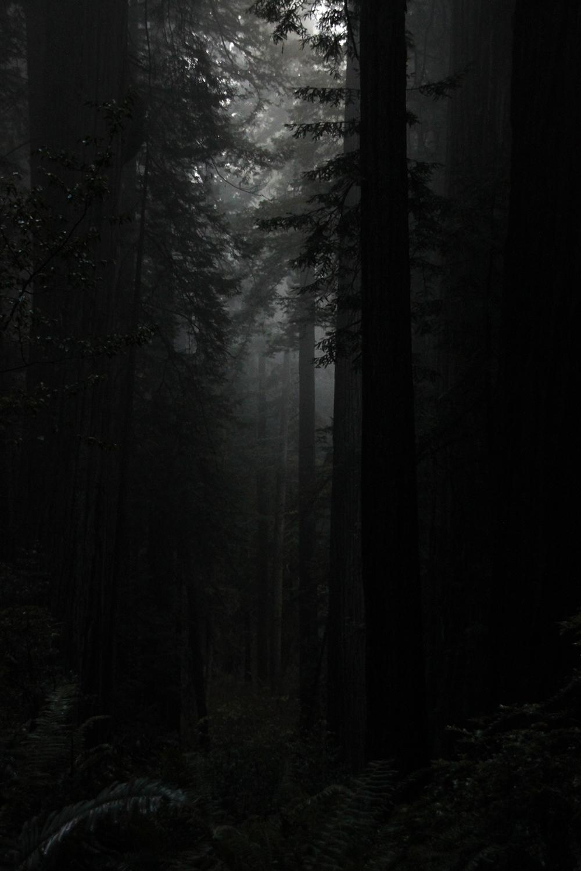 dark forest_Elin Eriksen.jpg