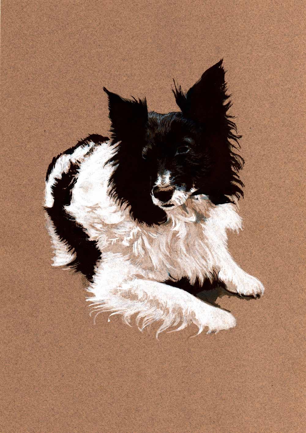 hund_colie_portrett_elinteriksen.jpg