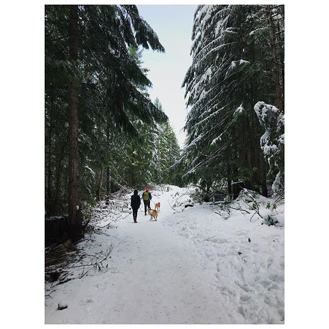 Some friends. Some dogs. Some snow. Love living close to hikes like this.