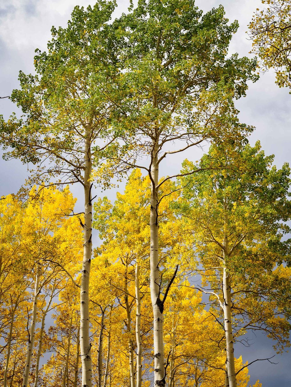 colorado colors-12.jpg