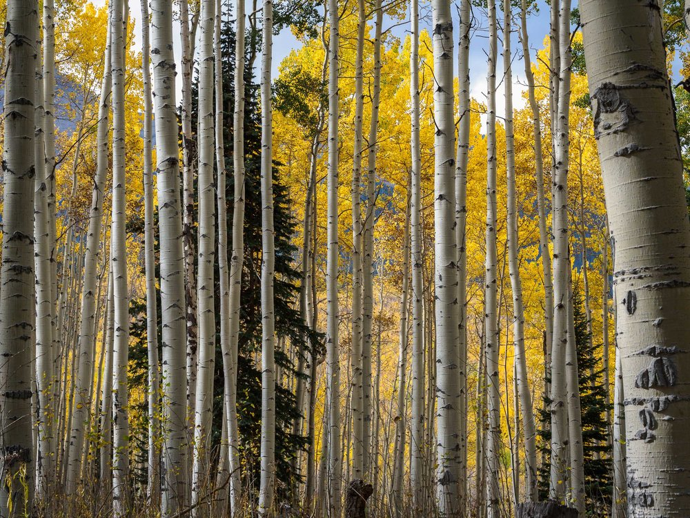 colorado colors-13.jpg