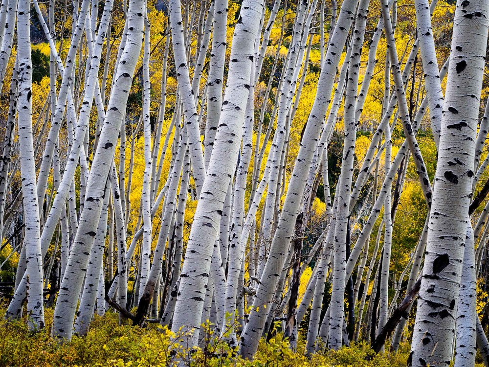 colorado colors-16.jpg
