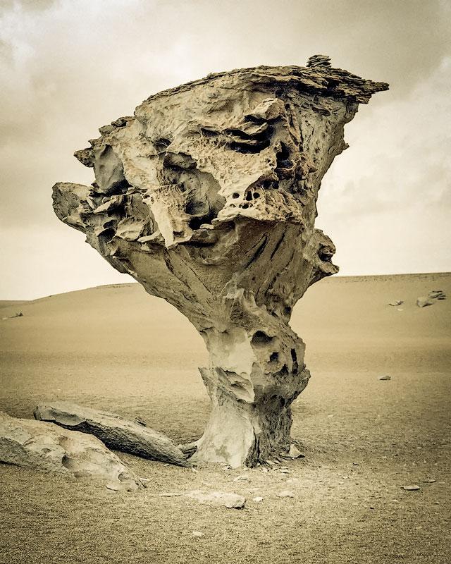 arbol-de-piedra