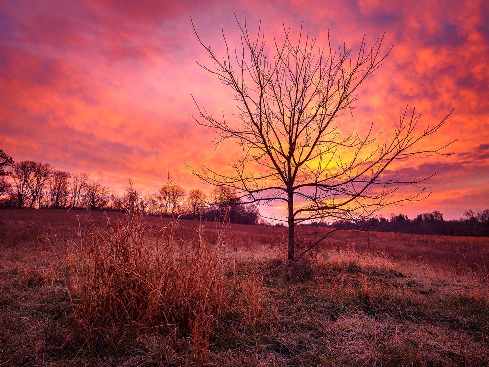 Dawn Frost.jpg