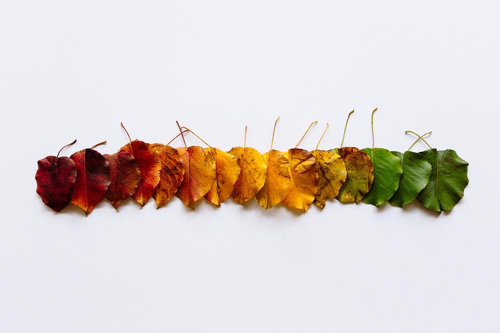 leaves-3.jpg