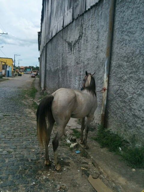 Horse, sufferer wa Jah