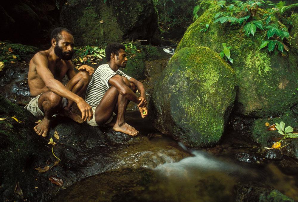 TwoAmbaiFriendsInRainforest.jpg