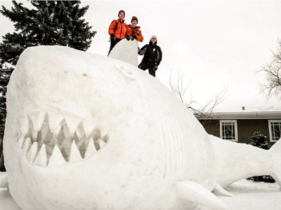 snow-shark-ap.jpg
