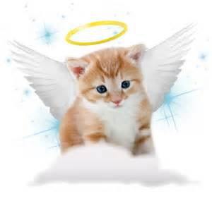 guardian angel kitten.jpg