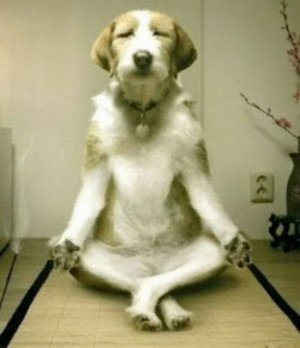 meditativedog.jpg