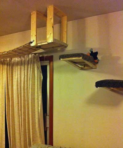 cat-environmental-enrichment-3.jpg