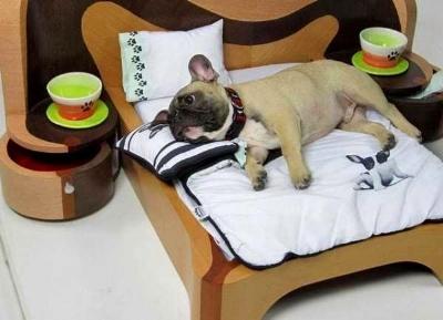 dog-cat-beds-pet-design-ideas-4-2.jpg