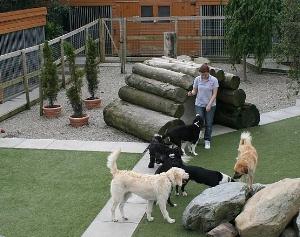 Dogs_running_free_at_barndarrig_kennels,_dog_kennels_barndarrig_wicklow_ireland.jpeg.jpeg